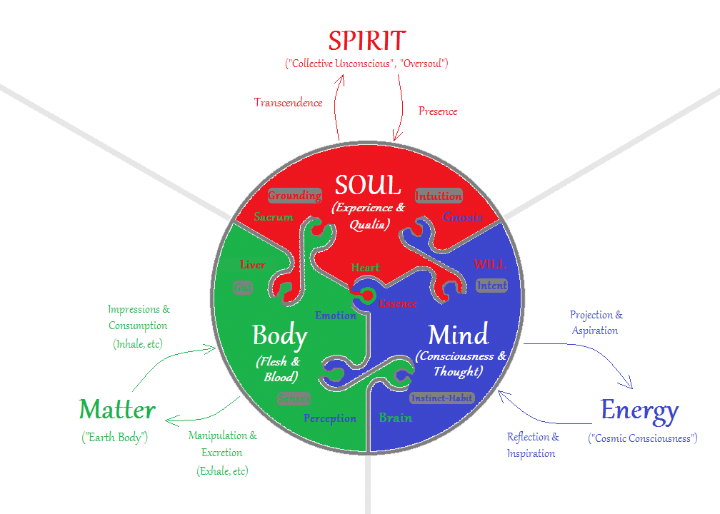 How the Mind and Body Work Together